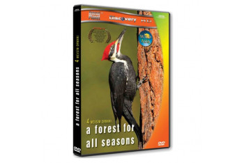 A Forest For All Seasons Dört Mevsim Ormanı