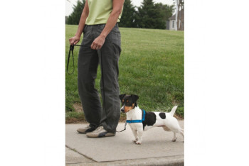 Deluxe Easy Walk™ Harness Göğüs Tasması